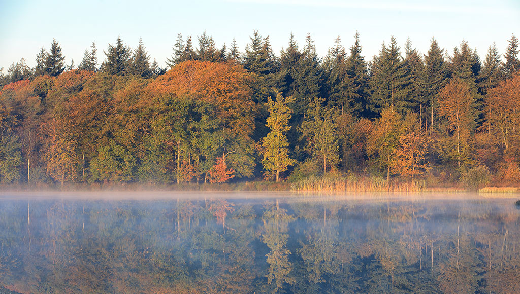 weekly-free-stock-photo-tree-lake-reflection-header-przyroda-jesien-autum-nature